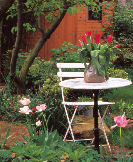 Tulipes sur table